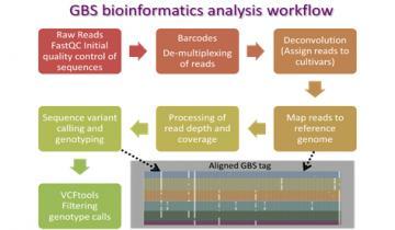 GBS bioinformatics analysis workflow